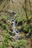 Woodland stream Royalty Free Stock Images