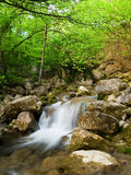 Woodland stream Royalty Free Stock Photo