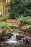 Woodland stream Stock Photo