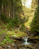 Woodland Stream. Royalty Free Stock Photography