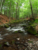 Woodland Stream. Royalty Free Stock Photo