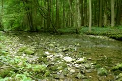 Woodland stream. Named Punkva, location Moravsky Kras near Brno city, Czech Republic, Europe Stock Images
