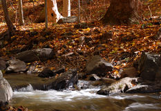 Woodland Stream & Autumn Leaves Royalty Free Stock Photography