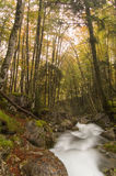 Woodland stream at the beginning of autumn stock photos