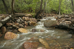 Woodland Stream in the Chiricahua Mountains - Portal, Arizona Stock Photo