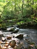 Woodland stream. A creek in the forest Royalty Free Stock Photos