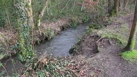 Woodland stream stock video footage
