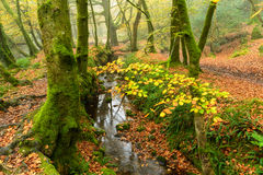 Woodland Stream Royalty Free Stock Photos