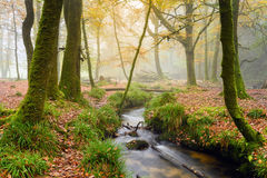 Woodland Stream Royalty Free Stock Photography