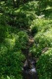 Woodland stream Stock Photos