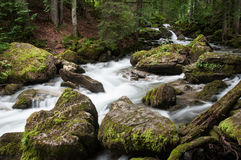 Woodland stream Stock Images