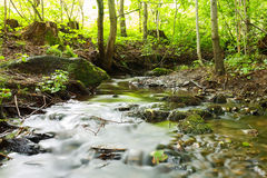 Woodland stream Royalty Free Stock Image