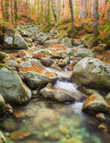 Woodland stream rushing over rocks covered with autumn leaves Stock Photography