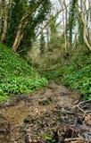 Woodland and stream Royalty Free Stock Photo