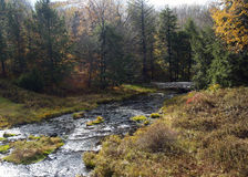 Woodland Stream. View of meandering woodland stream flanked by trees and autumn foliage Stock Photography