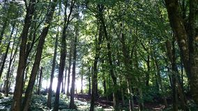 Woodland Sunlight Royalty Free Stock Photography