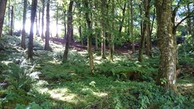 Woodland Sunlight Stock Photo
