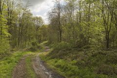 Woodland Track. Royalty Free Stock Photography