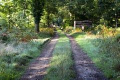 Woodland track stock photos
