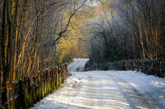 Woodland Track . Moorgreen,Nottinghamshire,UK. Winter day woodland track after snowfall Royalty Free Stock Photo