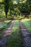 Woodland track stock image