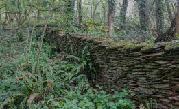 Woodland traditional stone wall Royalty Free Stock Photos