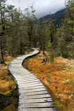 Woodland Trail. Boardwalk path disappears into forest trail, Milford Track Great Walk, New Zealand Stock Photo