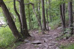 Woodland Trail Along the Chattahoochee River. This rocky pathway winds along the Chattahoochee River. One must take care not to trip over the old roots and royalty free stock photos