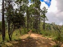 Woodland Trail Royalty Free Stock Photo