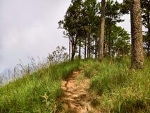Woodland Trail Stock Image