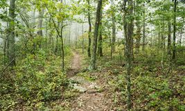 Woodland Trail in the Fog Royalty Free Stock Photo