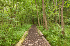 Woodland Trail Royalty Free Stock Images