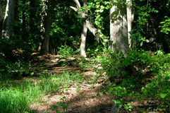 Woodland Trail stock images