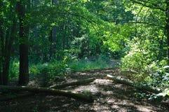 Woodland Trail stock photos