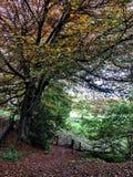 Woodland trails Stock Image