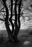 Woodland - tree. B&W photography stock photo