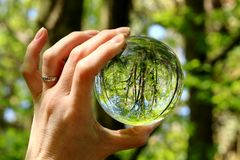 Woodland trees seen in miniature through a glass globe Stock Images