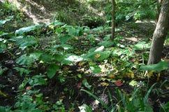 Woodland vegetation Stock Images
