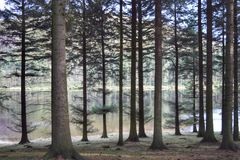 A woodland view. Woodland on a crisp winters morning Royalty Free Stock Images