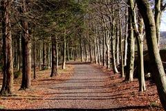 Free Woodland Walk Stock Images - 2020784