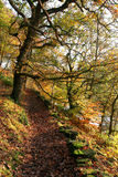 Woodland Walk. Royalty Free Stock Photo