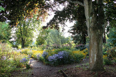 Free Woodland Walk Royalty Free Stock Photo - 39019345