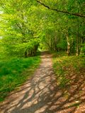 Woodland Walk. Pathway through woods at Lough Key Forest Park, Co.Roscommon, Ireland Royalty Free Stock Photo