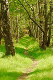 Woodland walk. Ing the path stretches out ahead of the viewer through an avenue of mixed woodland trees Royalty Free Stock Photo