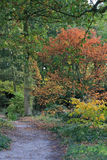 Woodland walk in Beth Chatto's Gardens Royalty Free Stock Image