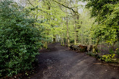 Woodland walk - Path Stock Image