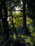 Woodland walk Royalty Free Stock Images