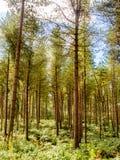 Woodland walk Stock Images
