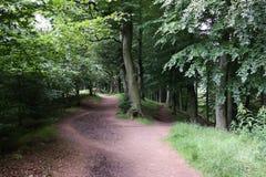Woodland walk Royalty Free Stock Image