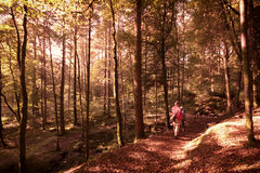 Woodland walk Stock Photos